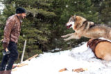 Salman Khan BATTLES Wild Wolves In This Fantastic New Promo Of Tiger Zinda Hai